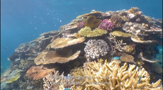reef-06.jpg