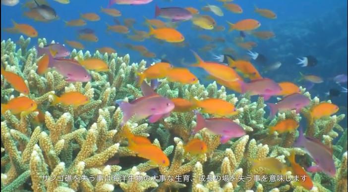 reef_04.jpg
