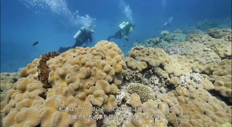 reef_07.jpg