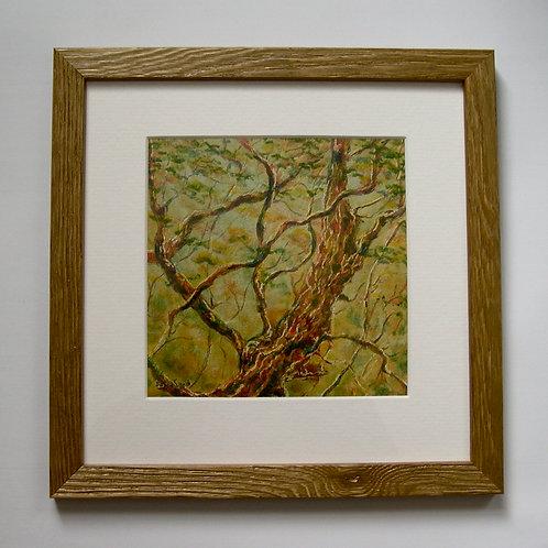 Under its leafy bows joy will be again