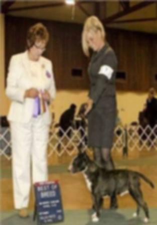 me showing dakine siberian huskies