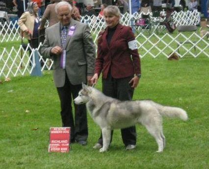 show Siberian Husky