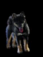 MVIMG_20200712_224347-removebg-preview (