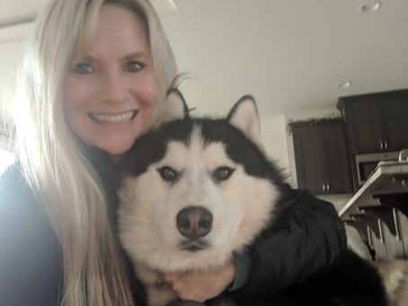 Why Structure is important even in a Pet Dog #Siberian Husky #structureindogs