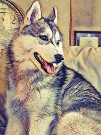 PhotoLab_app__IMG_20180419_134731.jpg