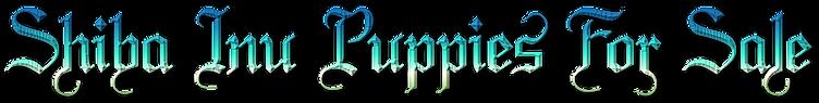 "alt=""Shiba Inu Puppies For Sale"""