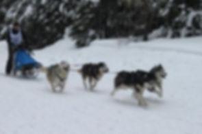 dakine siberians sled team