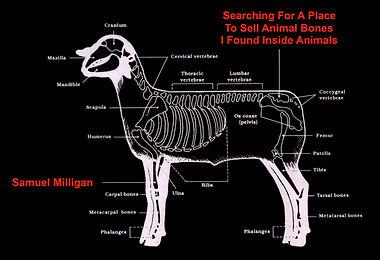 animal bones.jpg