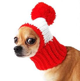 dog in hat.jpg