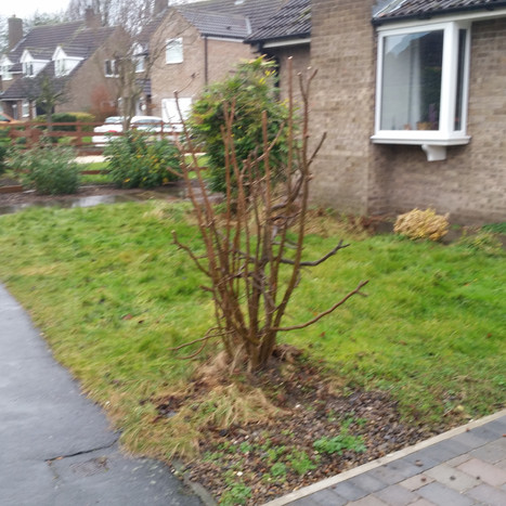 Small Front Garden Before - Yorkshire