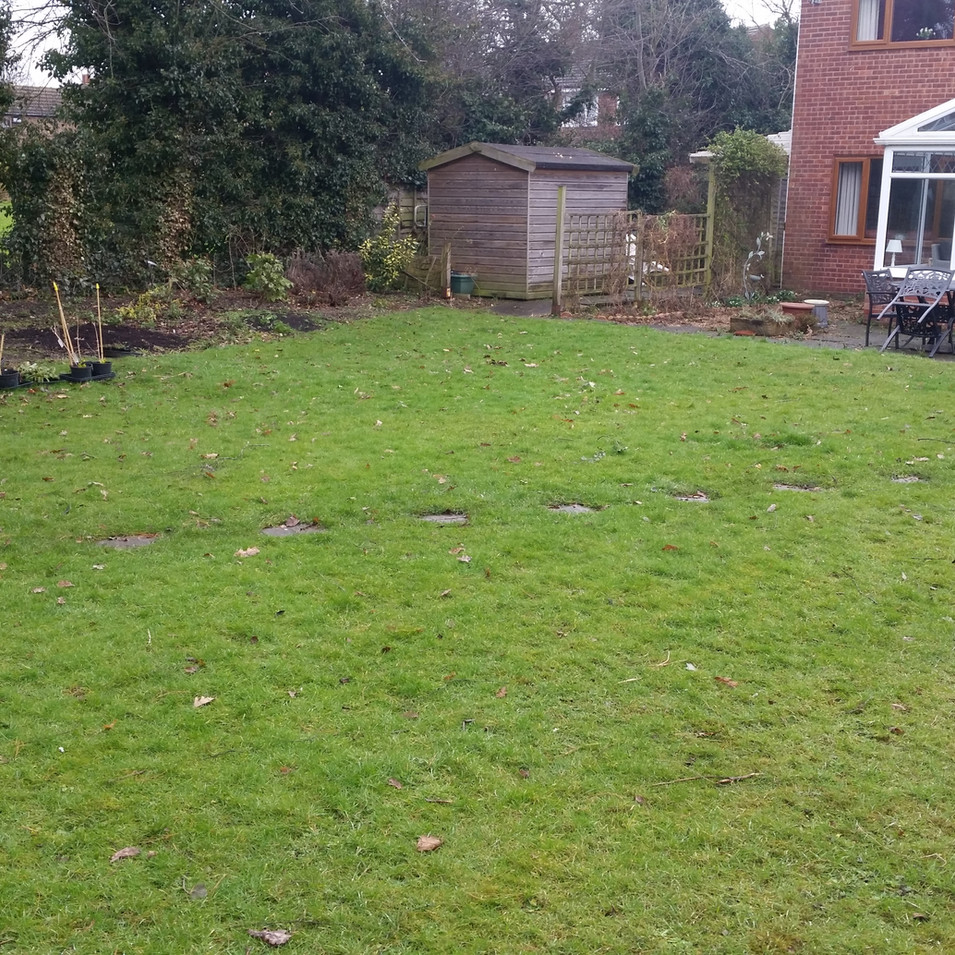 Back garden before design