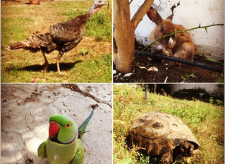 Bernard the lady turkey and the Garden of Misfits