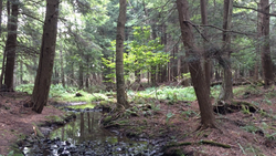 Stream through private forested land