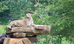 Open-Zoo-Pinnawala