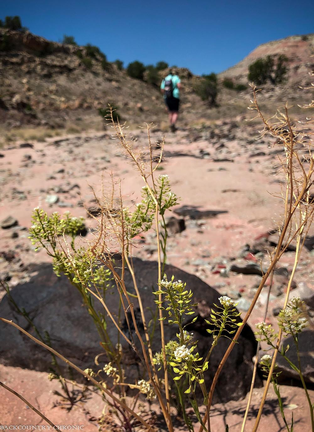Walking through Ojito Wilderness Area with Ankylosing Spondylitis