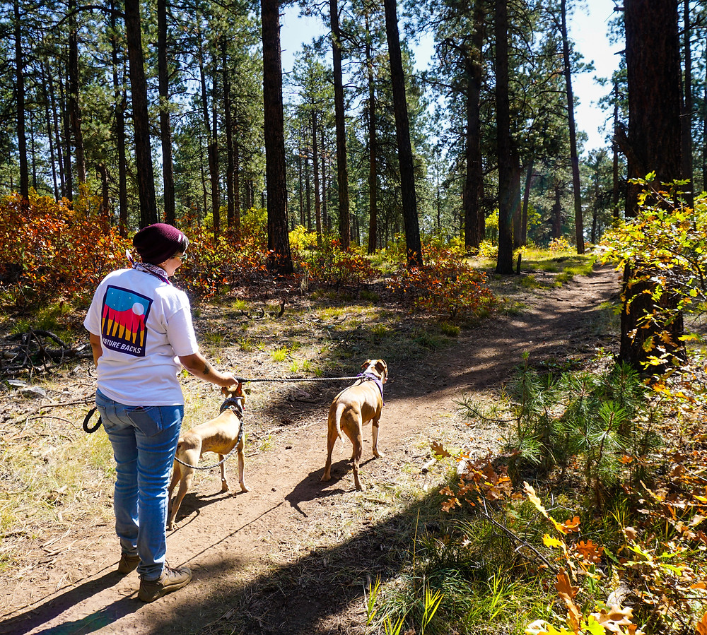 Hiking in the San Juan National Forest with Dogs