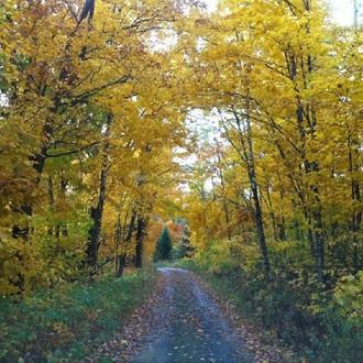 Maine Fall SQ.jpg