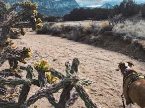 Striking Views without a Climb - Hike Placitas!