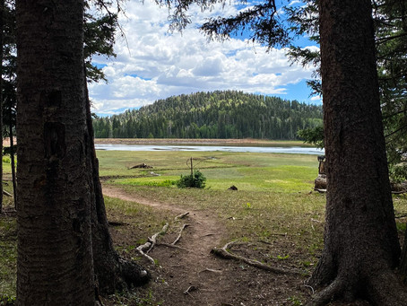 Wilderness at 10,000 Feet: A Day in the San Pedro Parks Wilderness