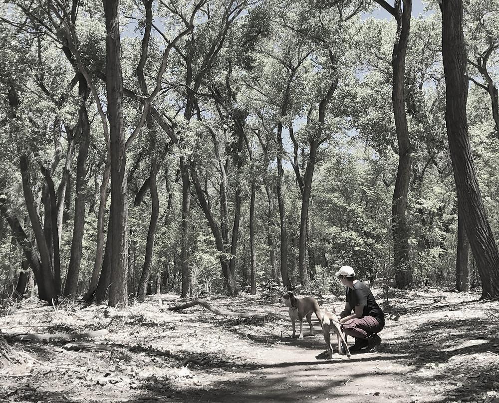 Trails in Albuquerque, New Mexico