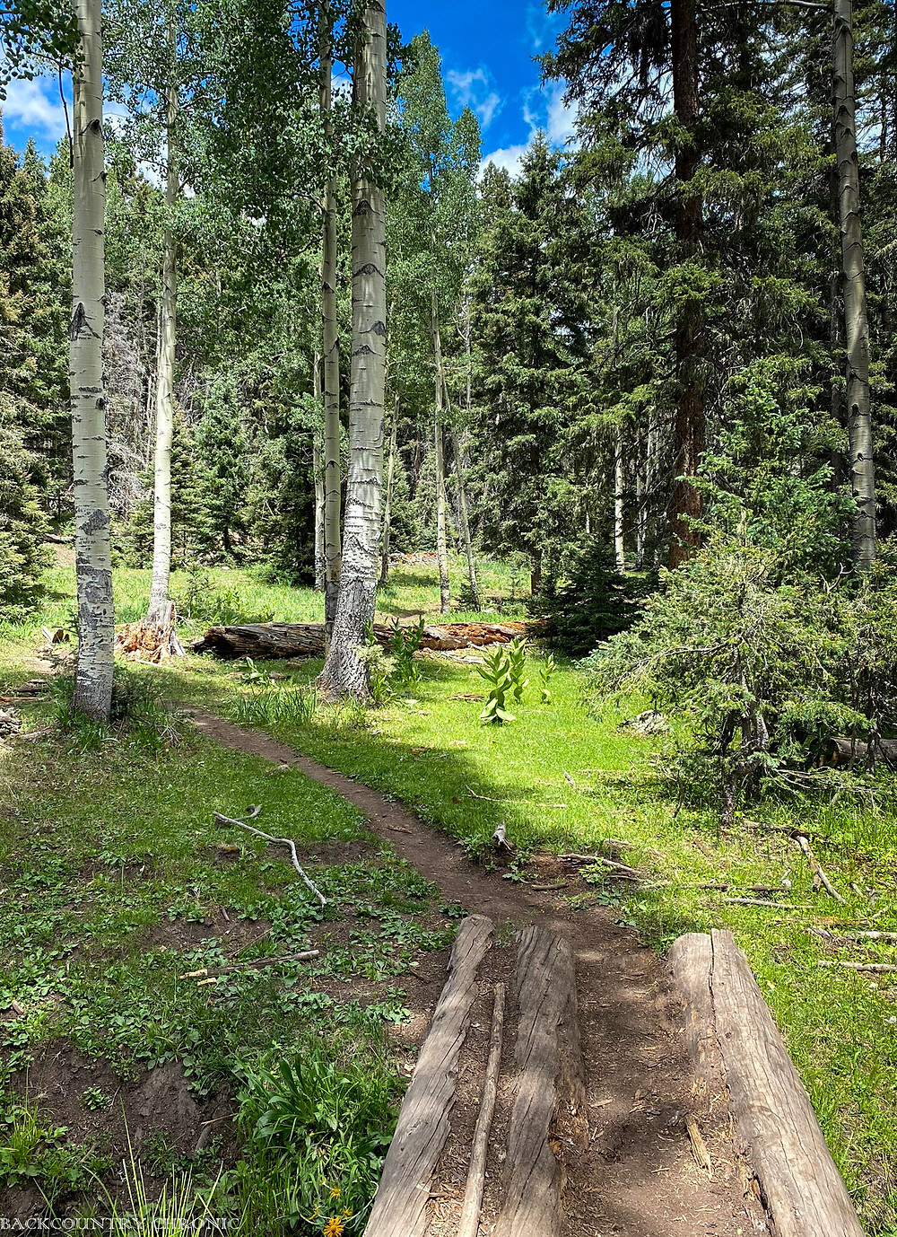 A trail through the wilderness area