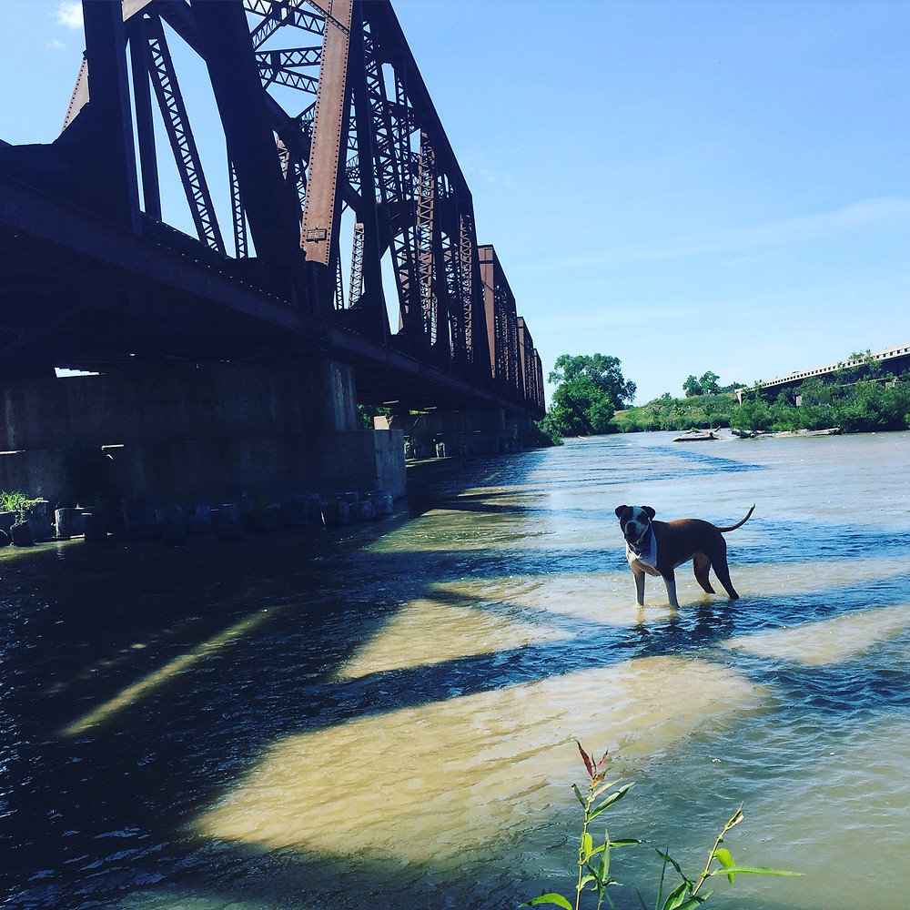 Have a dog that loves the water this much?