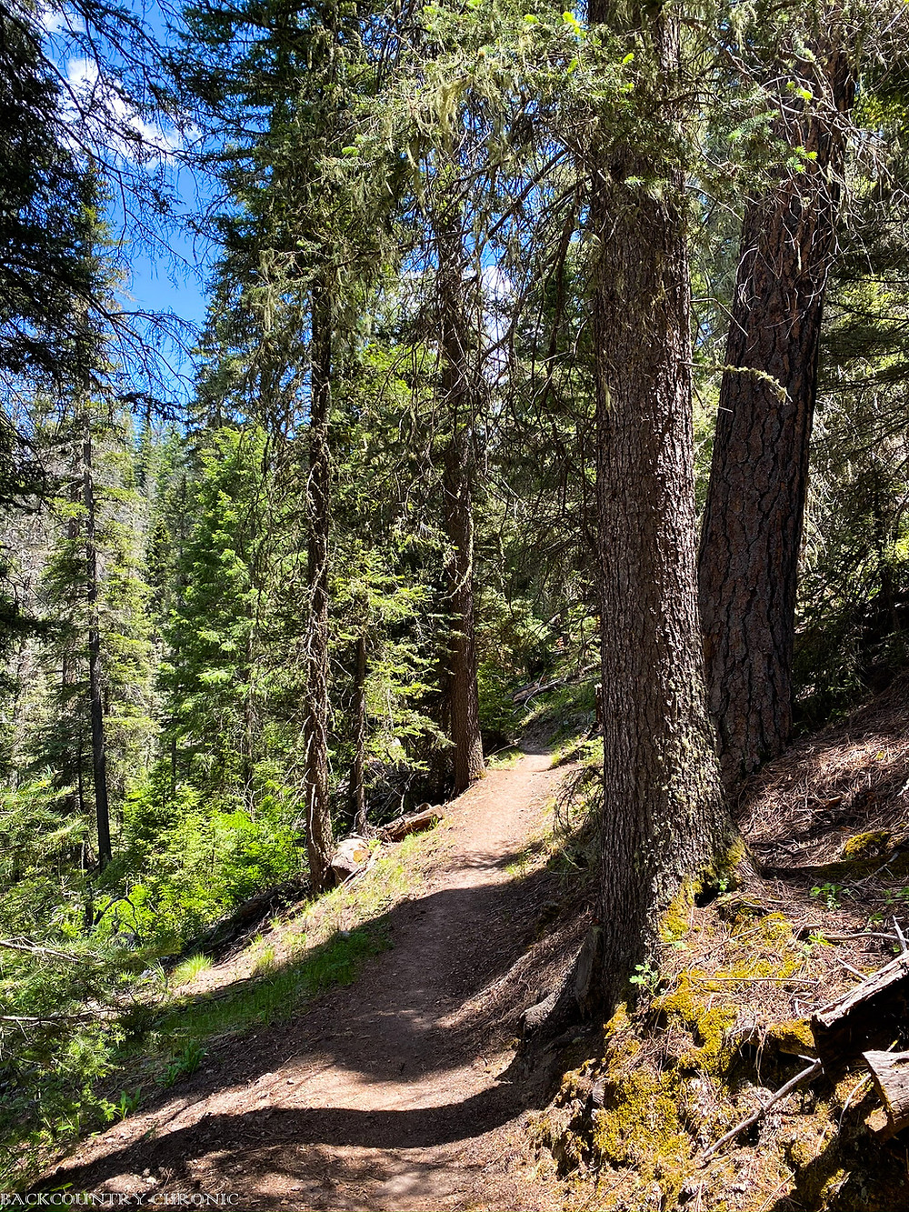 The East Fork Trail in the Santa Fe National Forest