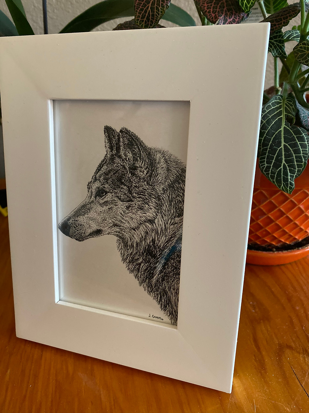 Pen and ink drawing of wolf
