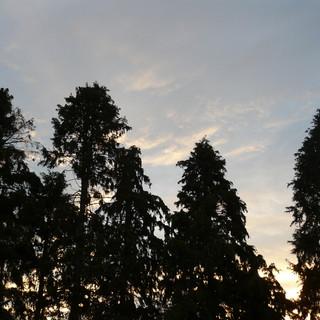 Waianakarua Trees