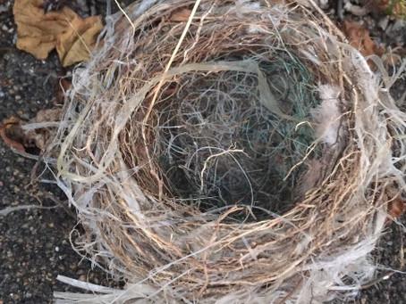 七十二候 雀始巣