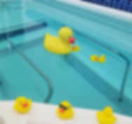 ducky%2520pictures_edited_edited.jpg