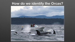 How to Identify Orcas_Page_1