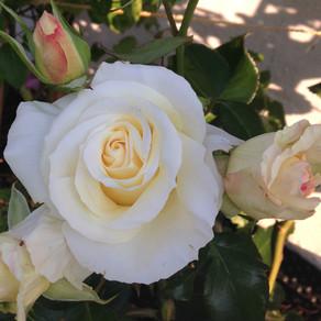 Hvordan få forholdet til å blomstre