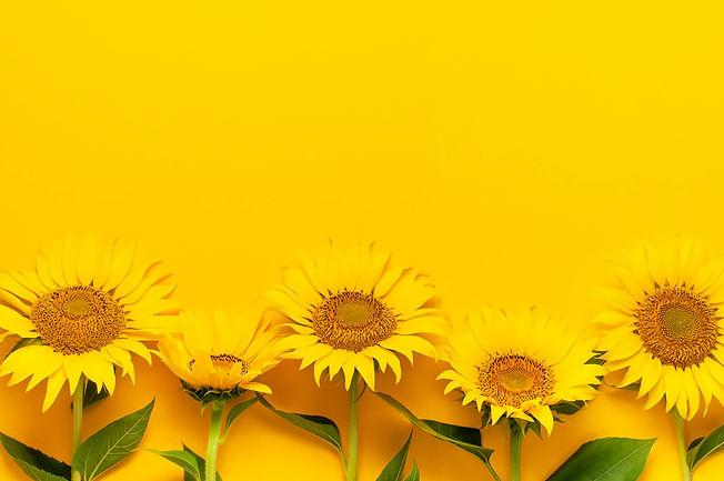 Beautiful fresh sunflowers with leaves o