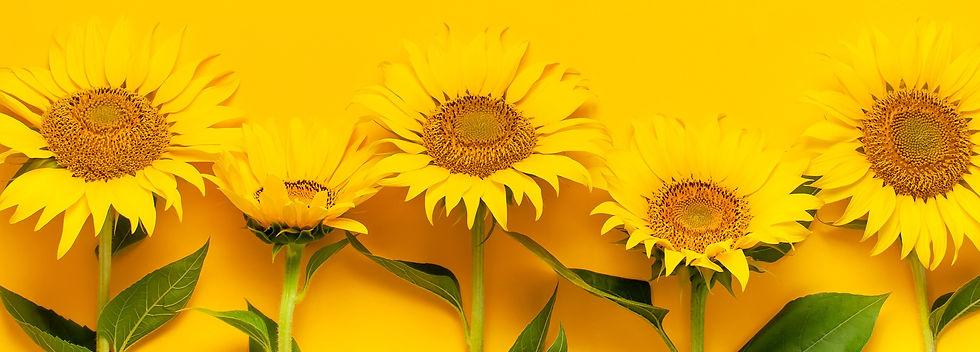 Beautiful%20fresh%20sunflowers%20with%20