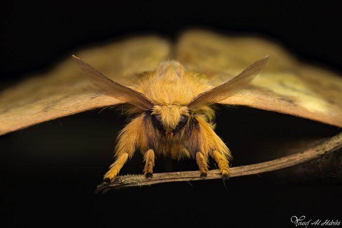 Moth (TBA)