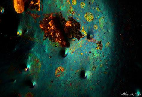 01. Chrysochroa saundersi.jpg