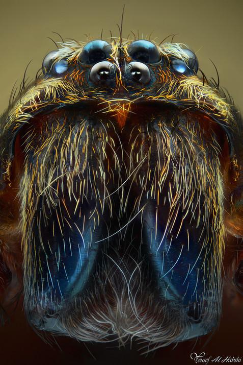 Long-Legged Wandering Spider