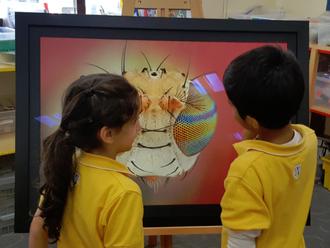 معرض ماكرو بأكاديمية المنى التأسيسية للأطفال