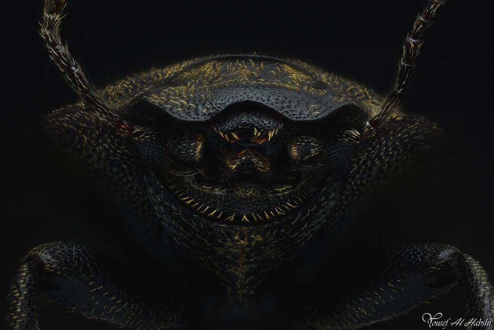 Beetle (TBA)