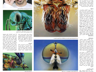 Al-Ittihad Newspaper