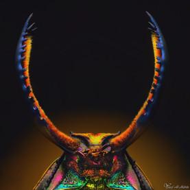 Lamprima adoiphinae