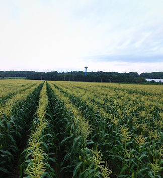 Drone real estate agriculure dubuque photography videography pictures videos farming scout hydration