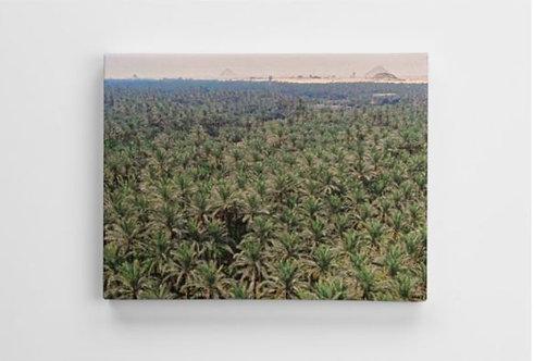 Pyramids & Palm Trees