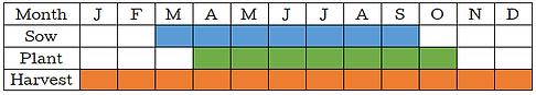 Rainbow Chard Graph.png