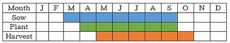 Radish Graph.png