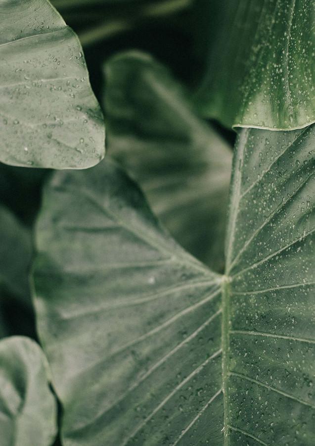 close-up-dew-dewdrops-1813513 copia.jpg