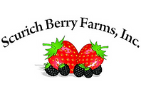 Scurich Berry.png