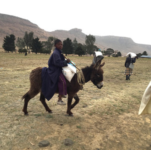 Donkeys are a major source of transportation in Lesotho's rural areas.  Here a young boy is taking 20 kgs of rice back to his village on his donkey.