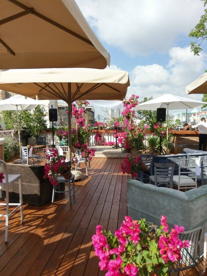 Fuchia Bouganvillea Jaffa Rooftop (3)